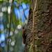 Bird - Manuel Antonio National Park