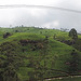 Ramboda - Panorama Tea Plantation