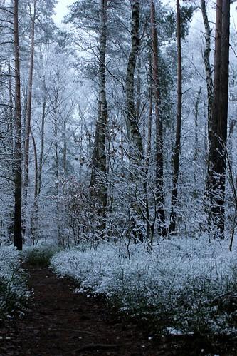 "Im Winterwald mit Schnee 2015 • <a style=""font-size:0.8em;"" href=""http://www.flickr.com/photos/69570948@N04/15783899573/"" target=""_blank"">View on Flickr</a>"