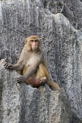 Vietnam (Michael Zahra) Tags: travel people tourism monkey asia vietnam viet exotic asean contactforpurchaseorlicensing