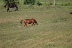 Dixieland Farm