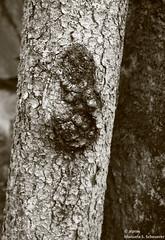(alpros) Tags: blackandwhite monochrome blackwhite sweden schweden skandinavien sverige scandinavia nordeuropa tyres tyresta svartvit northerneurope