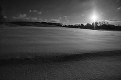 Texture.... (tbower) Tags: winter ohio blackandwhite bw snow monochrome geotagged nikon raw nef cs6 d3s starkcountyohio nikongp1 niksep nikkor24120f4vr