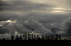 Pitt Meadows BC (Ian Threlkeld) Tags: trees winter sky canada nature clouds landscape nikon scenery flickr december skies bc britishcolumbia explore mapleridge irt 2014 pittmeadows ridgemeadows explorebc explorecanada d7000 alouetteriverdykes