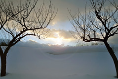 DSC_0949cr (chicadecasa) Tags: trees winter sunset snow cold japan bare aomori prefecture tsugaru