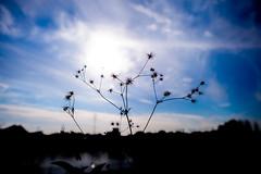Separate ways - D3s & Nikkor 24mm f/1.4G (TORO*) Tags: park blue shadow sky cloud white black green silhouette japan ed nikon branch f14 14 osaka 24 24mm af nikkor afs tsurumi ryokuchi f14g d3s