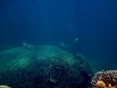 Grey Reef Sharks,Ningaloo reef ,Coral Bay, Western Australia (Marc Russo (Australia)) Tags: ocean summer sun fish seascape beach coral swim canon ray snorkel turtle wildlife australia marc outback reef ningaloo manta westernaustralia 1740 russo coralbay 70300 tigershark