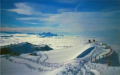 rigi (thomasw.) Tags: schnee winter snow mountains alps analog 35mm schweiz switzerland lomo europa europe cross suisse suiza alpen expired crossed rigi zentralschweiz