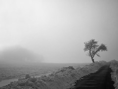 """Tree in  Winter"" (helmet13) Tags: leicaxvario landscape bw winter street tree snow silence fog aoi heartaward peaceaward world100f 100faves platinumheartaward platinumpeaceaward bestcapturesaoi simplicity"