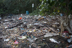 Dead fishes and trash at Lim Chu Kang Jetty, 8 Mar 2015 (wildsingapore) Tags: fish nature island death marine singapore underwater wildlife litter coastal shore threats farms mass intertidal seashore marinelife aquaculture wildsingapore limchukang massfishdeath