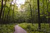 (Karl Hamelin) Tags: trees forest landscape nikon d3200 panth