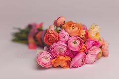 Ranunculus Florals 2 (jalquinn) Tags: life flowers portrait floral photography photo spring still portraiture bouquet florals