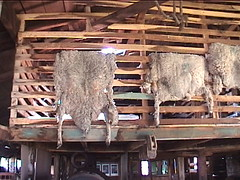 Sheep Skins Drying at Estancia Harberton