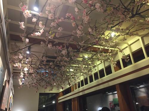 スタバ上野恩賜公園の桜