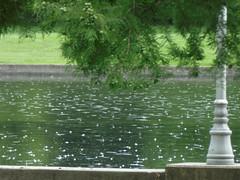 Rain on the water (timbo on the hill) Tags: tz60 panasonic columbus indiana millracepark summer 2016 rain splashes pond lampost tree water weather