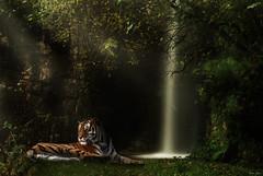 Relaxing (Karen James) Tags: waterfall tiger trees grass composite sunrays longexposure kj