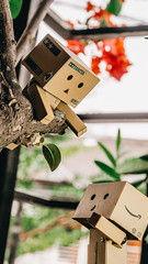 Help!! I'm stuck in a tree!! (ozzie_f@rocketmail.com) Tags: toys danbo toyphotography danboard olympusomdem5