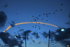 Unexpected birds (Otaclio Rodrigues) Tags: cu sky nuvens clouds postes posts luminrias streetlamps lua moon pssaros birds bluehour luzes lights resende brasil oro chemtrails contrails