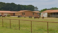 Hope All Your Fences Are Happy Ones (BKHagar *Kim*) Tags: horses horse house grass fence al outdoor alabama pasture tanner hay equine hff bkhagar