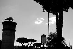 Roma, ovvero il riposo del gabbiano (LikeTheHitter) Tags: riposo gabbiano romano roma rome bianconero mouette seagull