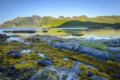 Colorful Lofoten (D-Niev) Tags: norway visipix