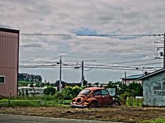 Growing VW Bugs (sjrankin) Tags: 23july2016 edited hokkaido japan hdr tsugitate vw vwbug car