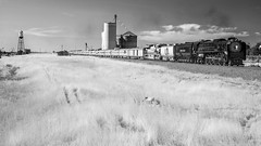 2016 Cheyenne Frontier Days Train - Pierce, CO (Christopher J May) Tags: aiconverted nonai nikonmicronikkor55mmf35 nikond600 northern 844 excursion passengertrain co colorado pierce greeleysub unionpacific train railroad locomotive steam cheyennefrontierdaystrain