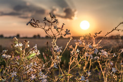 Here goes the Sun (Renate Bomm) Tags: nochecita atardecer sun sunset golden goldenestunde renatebomm 366 2016 nature natur sonne germany summer sommer july flickrunitedaward clouds wolken sky intothesky