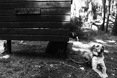 (julsyg) Tags: bw blanco y negro black white perro dog waiting sadness abandon cruel playa bosque cubo madera wood sign loyal dogs cute