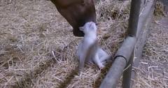 Horse petting a cat via http://ift.tt/29KELz0 (dozhub) Tags: cat kitty kitten cute funny aww adorable cats