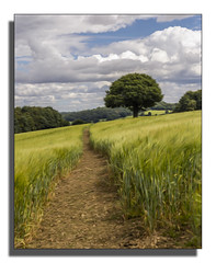 Come on, It's This Way (darrenball189) Tags: ancient tree nature oak old background green landscape grass foliage single sky summer countryside scenery sunny field outdoor blue outdoors meadow farm clouds land scene