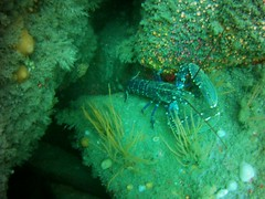 18 July 2016 - Scillies Trip PICT0186 (severnsidesubaqua) Tags: scillies scilly scuba diving