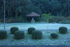Gelo (rafaeldeoliveira) Tags: curitiba paran brasil inverno winter geada freeze gelo parquebacacheri canon canoneosrebelt2i