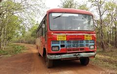 MSRTC Queen @ tadoba national park , chandrapur (yogeshyp) Tags: msrtc