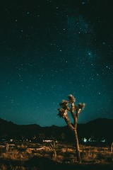Eternity (mripp) Tags: america amerika usa joshua tree yucca palm start starry night nacht sterne art kunst fuji xpro2