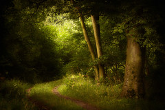 Path through the Woodland (aveyardphotography) Tags: winding path trees woods forest track sunlight trunk green soft shallow focus dappled light north yorkshire patchy daylight canon 5d mkiii