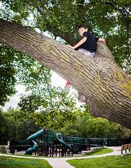 DSC07586.jpg (teddythaden) Tags: boy cityoflakes climb climber exploreminnesota lakeharriet minneapolis minnesota mn mpls nightatthepark playground treeclimber