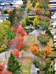 Fall Foliage on Beacon Ave and Beacon Hill, Seattle 039 (longbachnguyen) Tags: seattle beaconhill georgetown washington fallfoliage autumn fallcolors landscape landscapephotography aerial aerialphotography aerialphotographer