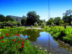 Belle's Brook Reflection (dimaruss34) Tags: newyork brooklyn dmitriyfomenko image summer brooklynbotanicgarden reflection