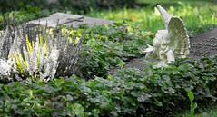 Angel on grave (schauplatz) Tags: deutschland stuttgart waldfriedhof friedhof cemetery figurine skulptur plastik engel angel