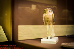 IMG_1045 (photobyjag) Tags: egypt egyptian ancientegypt queennefertiti nefertiti historyartifacts egyptianmuseum ancienthistory historyofegypt artifactsofegypt james gatchalian egyptianartifacts