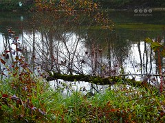 Weide am Fluss Iller in Deutschland -  Willow on the river Iller in Germany (warata) Tags: 2016 deutschland germany sddeutschland southerngermany schwaben swabia oberschwabenupperswabia schwbischesoberland badenwrttemberg illerderfluss river landschaft landscape flusslandschaft iller herbst autumn laub weide salix willow