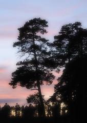 Good night (HORB-52) Tags: berndsontheimer badenwrttemberg blackforest schwarzwald sonnenuntergang fortnoire