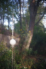 DSC04049 (Old Lenses New Camera) Tags: sony a7r schneider schneiderkreuznach xenon 5cm 50mm f2 plants garden tree lightningrod
