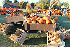 Autumn Sensation (bigbrowneyez) Tags: autumnsensation autumnharvest pumpkins corn husks boxes barn wood fun displays fabulous amazing awesome fresh nature bailsofhay hay people sunny bright sole vegetables edible nutritious manotick bankfield canada pumpkinpatch seasonal autumn ottono dof beautiful colourful colours textures sky trees alberi abundance