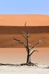 Deadvlei, Namibia (C McCann) Tags: deadvlei namibia deadvleinamibia tree camelthorn dead salt pan sossusvlei sand desert africa