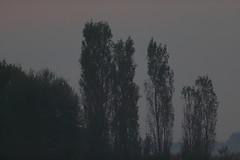 Aspettando i colori... (carlo612001) Tags: natura alba nature daggry  sunrise aube amanhecer amanecer morgendmmerung