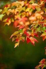 _DSC2507 (BrettGV) Tags: autumn sonnart18135