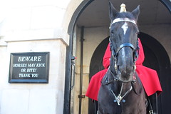 A walk in London, November 2014 (judethedude73) Tags: horse london uniform guard streetphotography protection