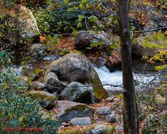 On Big Creek (mikerhicks) Tags: usa fall landscape geotagged unitedstates hiking northcarolina backpacking ola bigcreek waynesville greatsmokymountainsnationalpark gsmnp crestmont baxtercreektrail canon7d sigma18250mmf3563dcmacrooshsm geo:lat=3574888408 geo:lon=8311078168